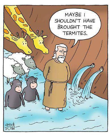 Ark termites.jpg