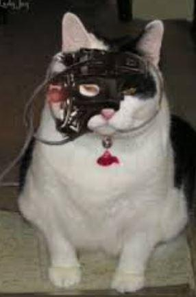 cat1.jpg.84166a90bc6bf40b9093573c750f32e5.jpg